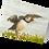 Thumbnail: Puffin Taking Flight:
