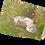 Thumbnail: Northern Fulmar  (Mallie)