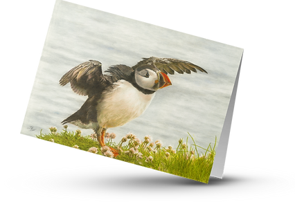 Puffin Taking Flight Card.png