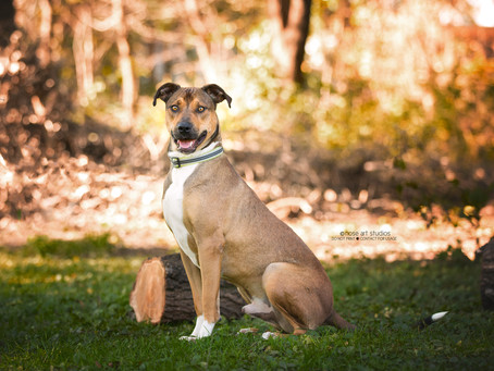 The Dirty Little Secret of Dog Photography