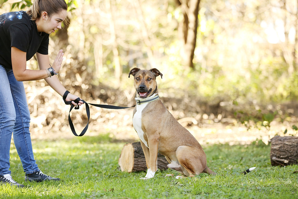 Shelter dog posing for a professional photo session.
