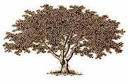 liberty_tree2.jpg