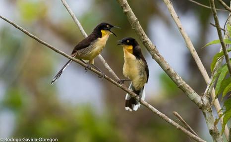 Aves del El Escondite