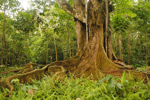 El Escondite ReservaNatural