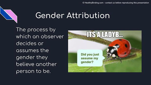 p1 slide - gender attribution.jpg