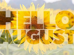Hello AUGUST word on sunflower backgroun