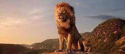 LION 2.jpeg