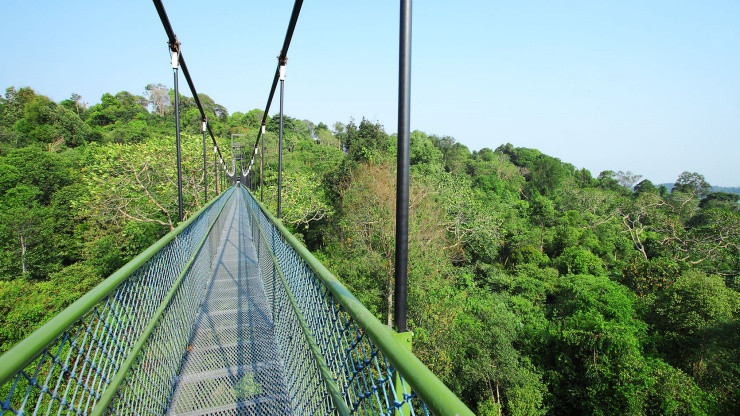 Beyond Extra - Be SG - Macritchie Reservoir Treetop Walk