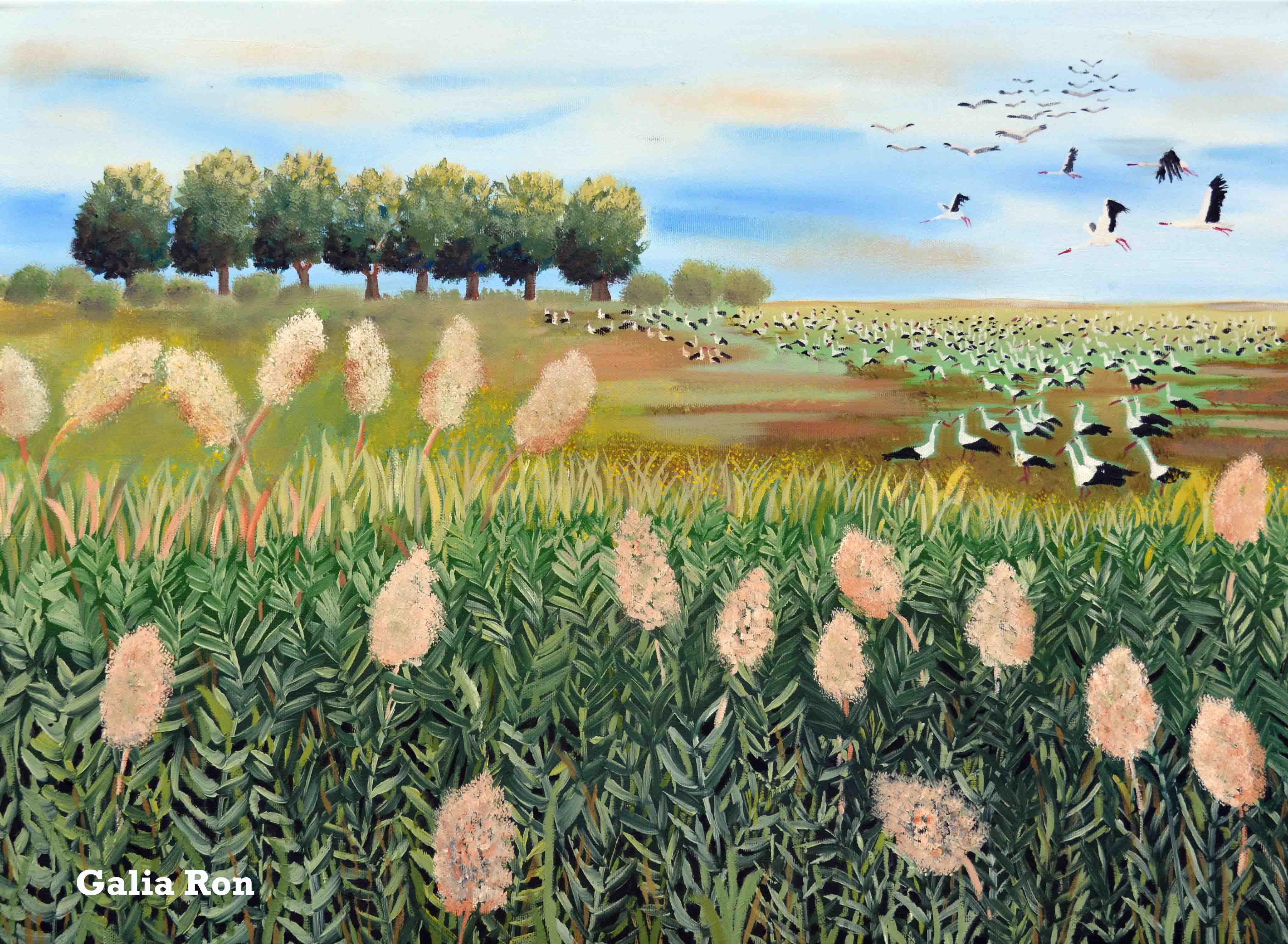 חסידות בשדה- גליה רון