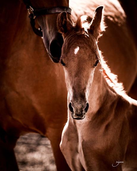 Sugar-Hill-Farm-Foal.jpg