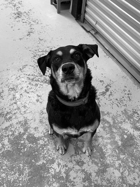 Lola Bean, Shop Dog