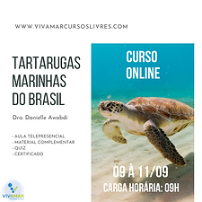 TARTARUGAS MARINHAS.png