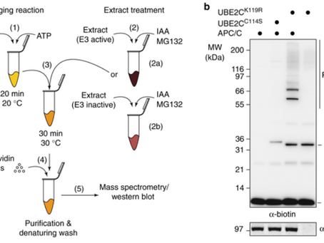 Find our latest pre-print on the bioRxiv!