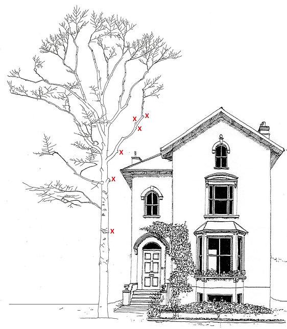 arbre maison.jpg