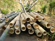Ethiopia-Bamboo-Industry.jpg