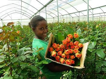 Ethiopian-Flower-Farm.jpg