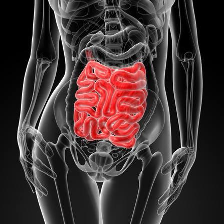 Gut Health and Thyroid Seminar