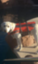 Apollo life jacket.jpg