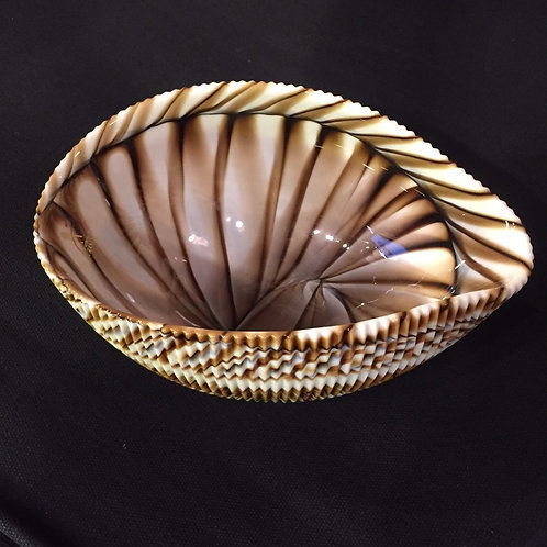 Brown Shell Bowl Small