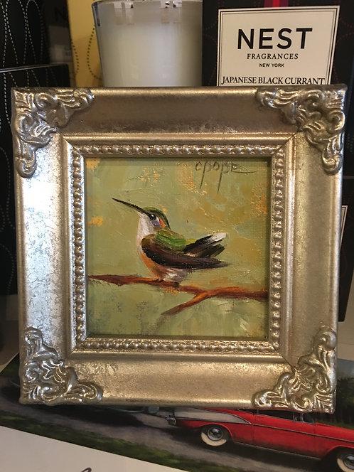 Hummingbird 019