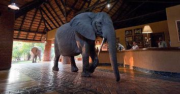 mfuwe-lodge-south-luangwa-national-park-