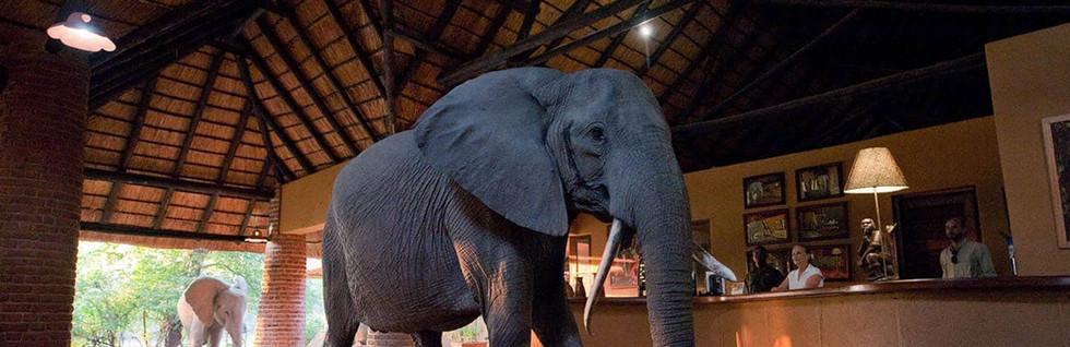 A Classic Zambia Safari
