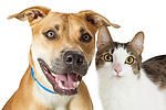 happy-crossbreed-cat-and-dog-together-su