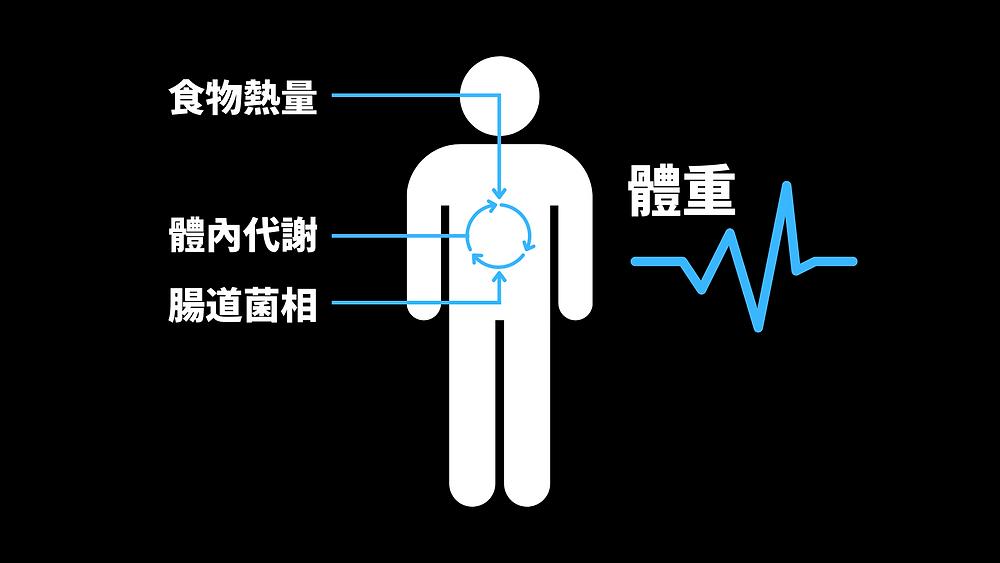 3大因素影響體重變化