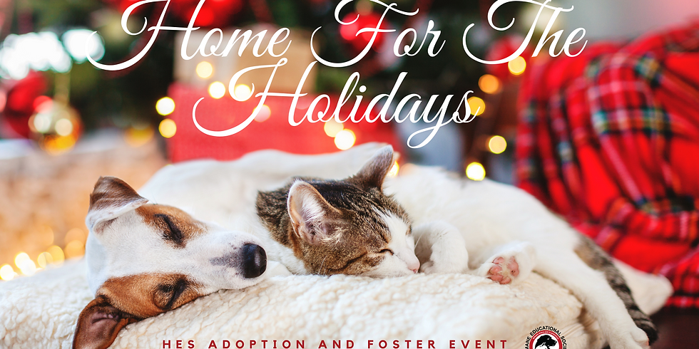Home for the Holidays Adoption and Foster Event