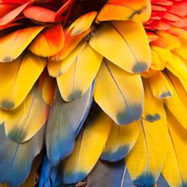 Momentos en Color