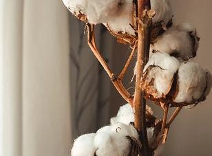 clean cotton.jpg