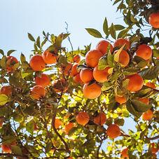 sunshine & citrus.jpg