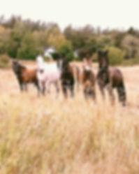 Stall Adams skolhästar är redo för en ny