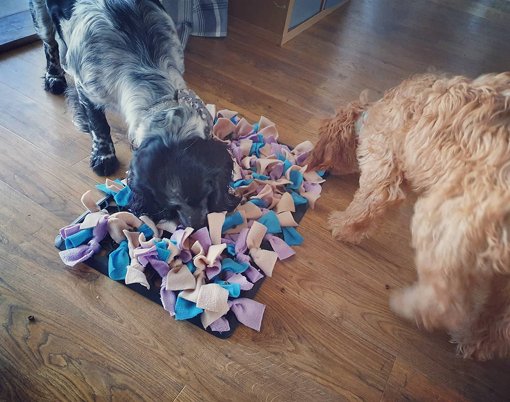 2 dogs using a snuffle mat