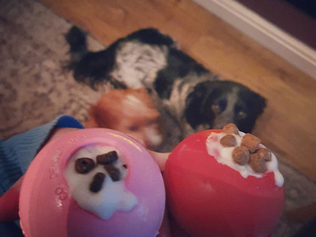 5 Easy Ways To Entertain Your Dog While Self-Isolating