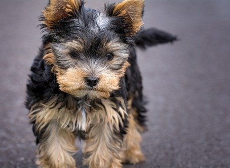 Getting a new furry family member? Here are some tips to prepare