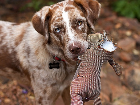The best dog toys and chews for your pooch