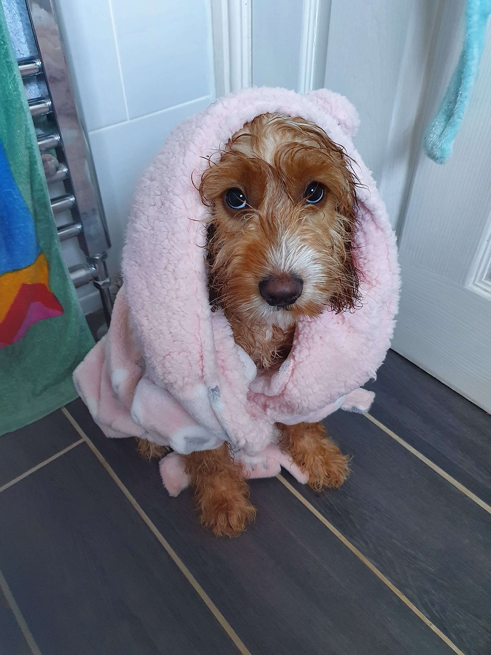 Puppy in a dressing gown