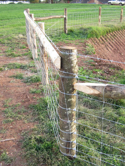 Stock fence. 2015 (6)