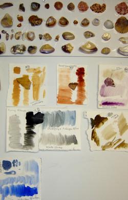 Matching Pigment Colors -Sea Shells