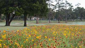 UF Study- Golf Course Pollinators
