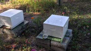 West Coast Hives