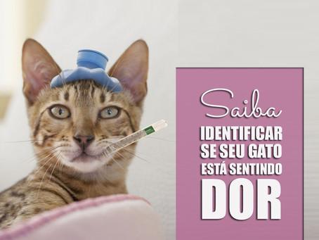 DOR em gatos.