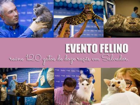 Evento felino reúne 120 gatos em Salvador