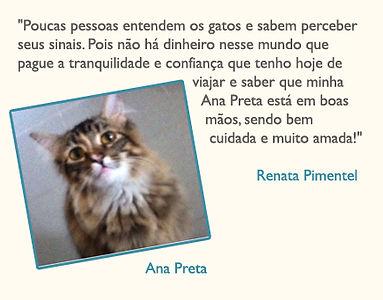 catsitter5