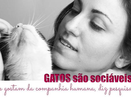 Em experimento, felinos indicaram que contato é mais importante do que comer.