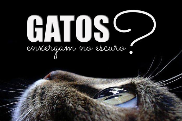 Mitos X Verdades: Gatos enxergam no escuro?