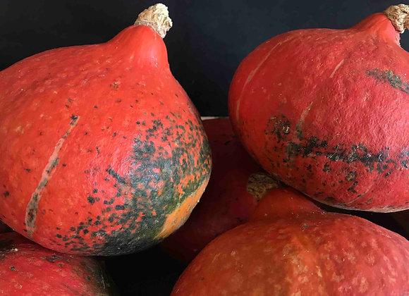 Potimarron - Moche mais bon - env. 1,1kg