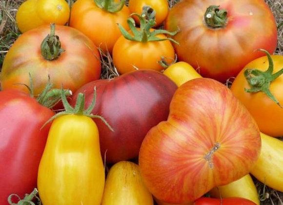 Tomates anciennes en méli-mélo - env. 1kg