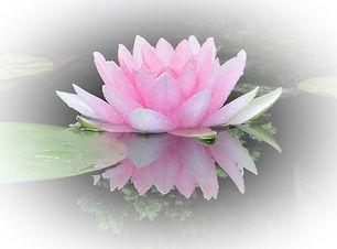 flower-2514521_1920website3.jpg